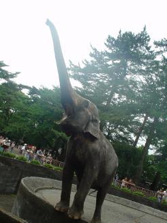 elefanto1.jpg