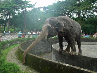 elefanto2.jpg